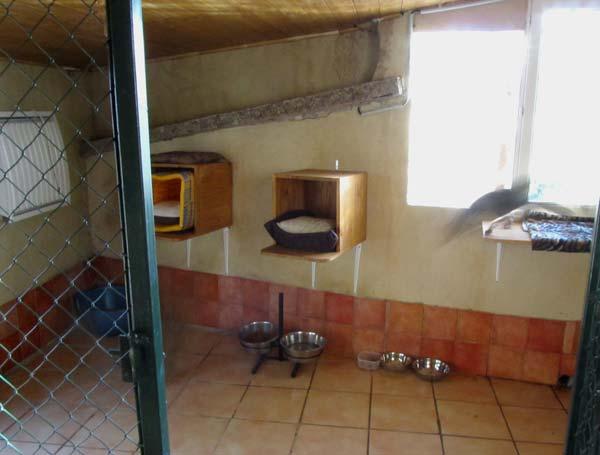 Savanne Africaine Féline - élevage professionnel et vente