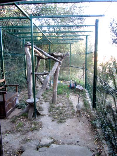 cage exterieur chat affordable beau grande cage pour chat. Black Bedroom Furniture Sets. Home Design Ideas